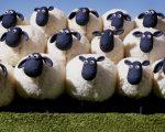 Sheep McSheep