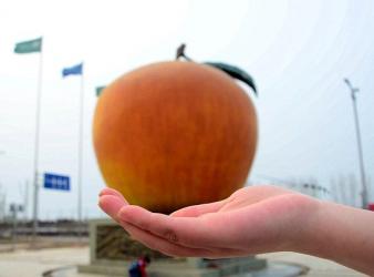 gmo apple